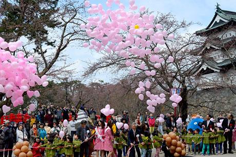 弘前櫻花節-石垣改建前的機遇,預計將有200萬人