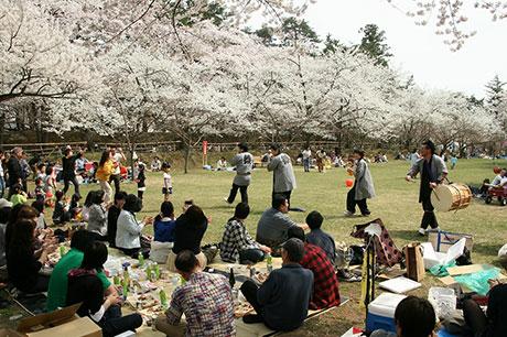 弘前公園賞櫻的服務