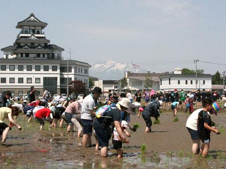 1600人在青森縣和稻中田舎館村種稻田