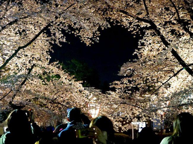 """弘前公園的隱蔽景點""""心""""櫻花"""