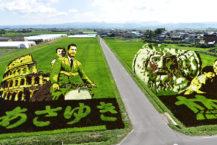 就像一幅真實的畫!  稻田裡湧現的巨型藝術
