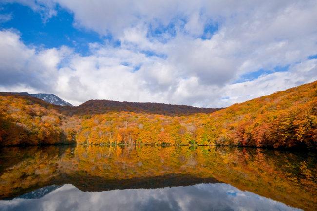 青森未開發的地區 秋天的葉子被染成鮮紅色的早晨