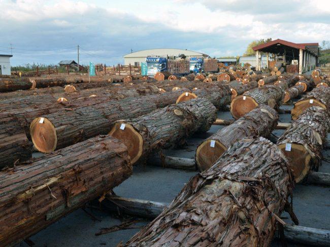 在青森縣和黑石市展出和銷售木材 銷售具有300年曆史的天然柏木
