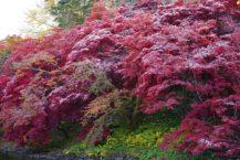 在弘前公園的秋葉中下雪 緩慢的秋葉和最冷的季節