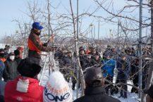弘前的蘋果修剪技術課程  1300名蘋果農民聚集