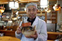 """弘前的專賣店在Fugu no Hi上提供有限的菜單 中國燈籠""""發財"""""""