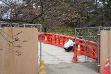 弘前市 SNS外出請問公園櫻桃的長度 網的反應是