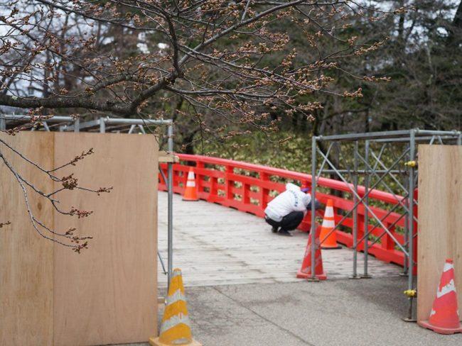 弘前市 SNS傳出副歌詢問公園的櫻花的長度 網的反應