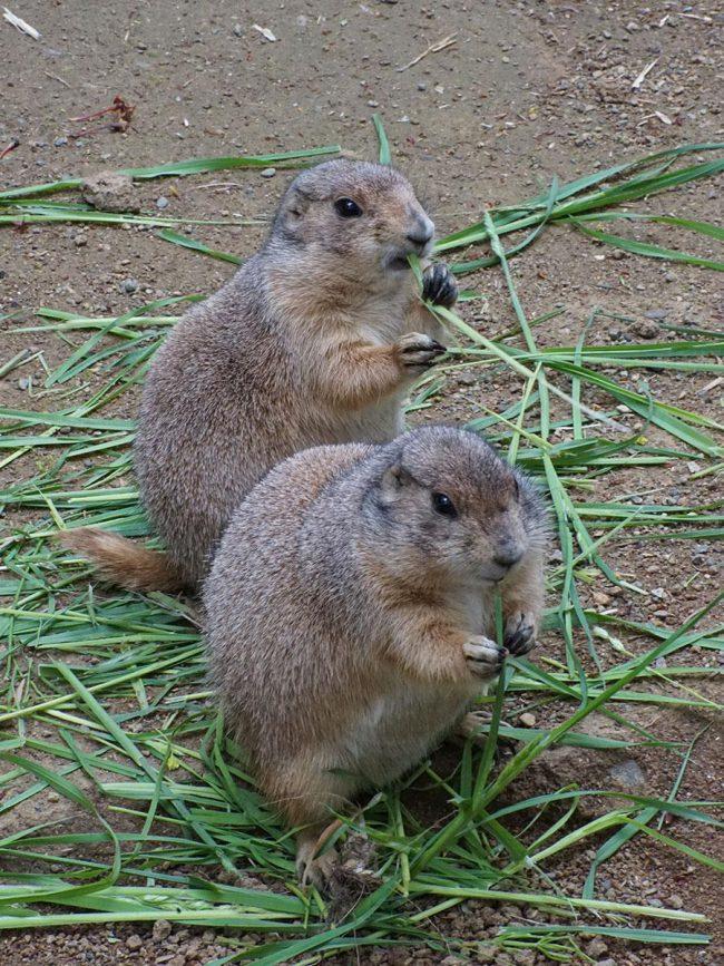 """弘前的"""" 弥生伊科伊諾廣場""""是一個月來第一次開放 動物園和露營地"""