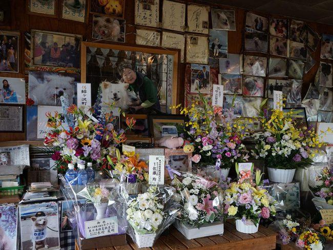 """青森受歡迎的狗"""" Wasao""""已經死了 鮮花和送葬者,不間斷"""